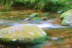 Royal National Park Stream