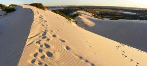 Cronulla Sand Dunes Sutherland Shire